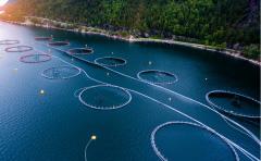 水産養殖事業